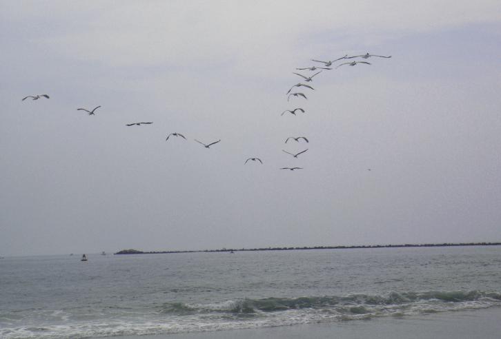 birds-over-sea