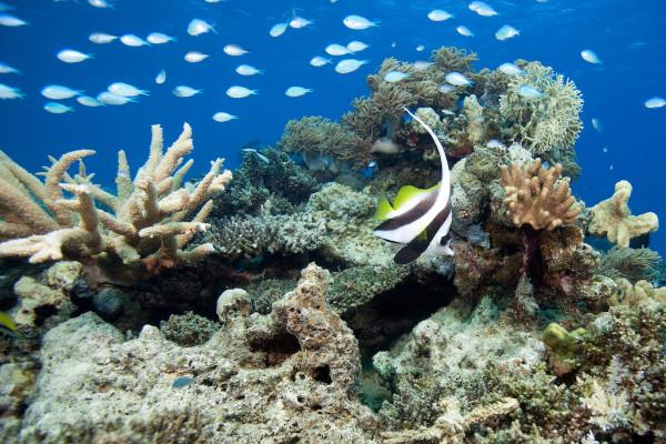 5 - Andrew Jalbert - Fiji Underwater